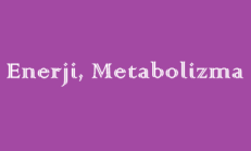 Enerji, Metabolizma 9. Sınıf Biyoloji Online Test