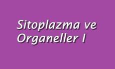 Sitoplazma ve Organeller 1 Online Test