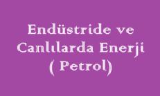 Endüstride ve Canlılarda Enerji ( Petrol) Online Test