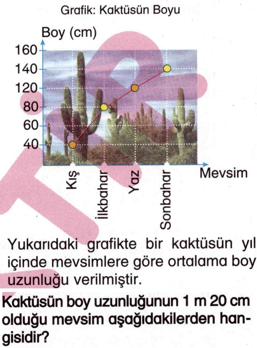 Kaktüsün boy uzunluğunun hesaplanması ile ilgili soru