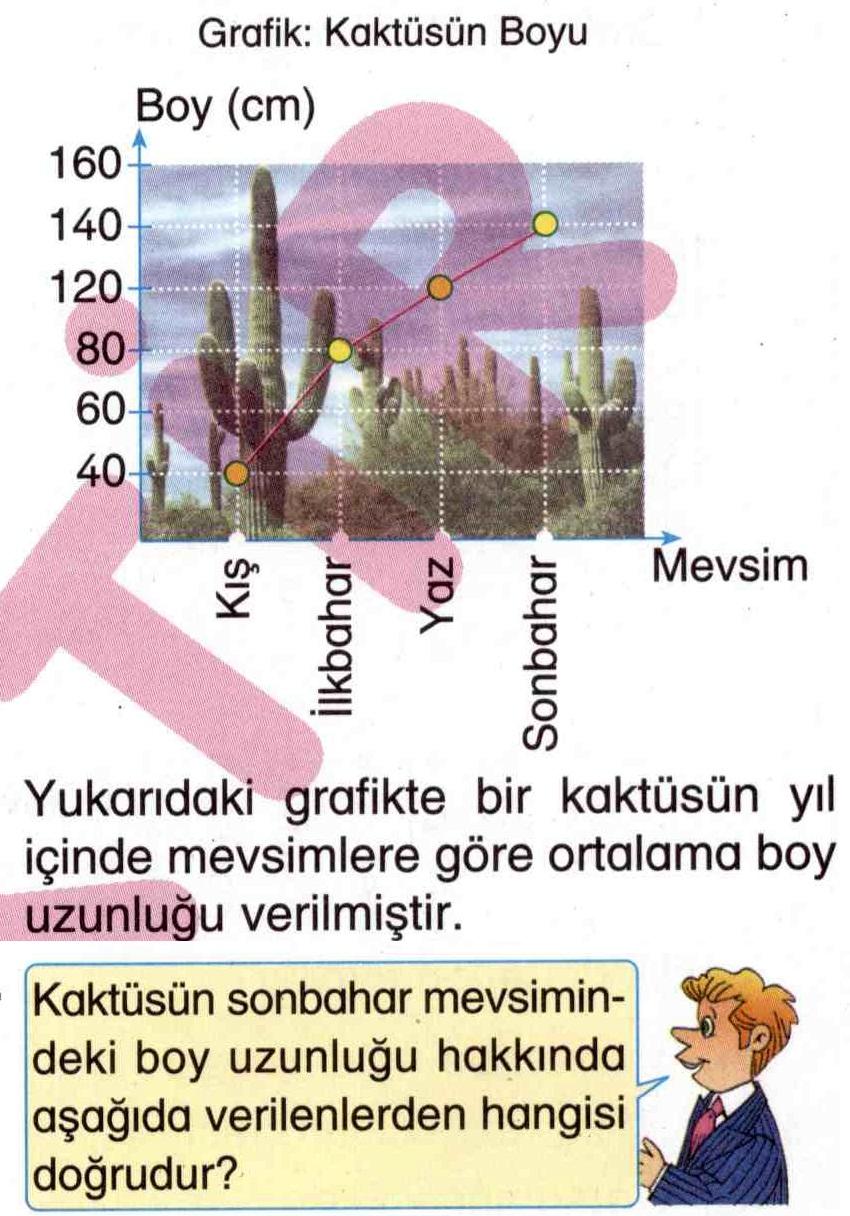 Kaktüsün sonbahar mevsimindeki boy uzunluğu ile ilgili soru