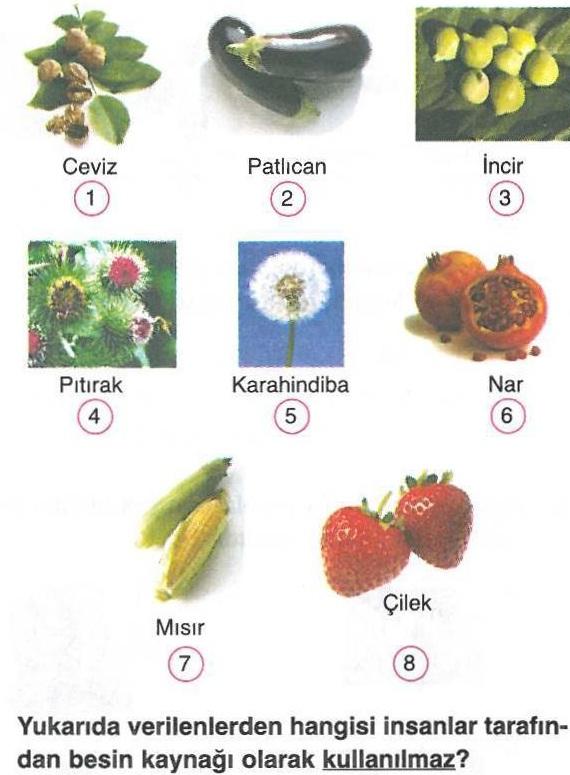 Besin kaynağı olmayan bitkiler ile ilgili soru
