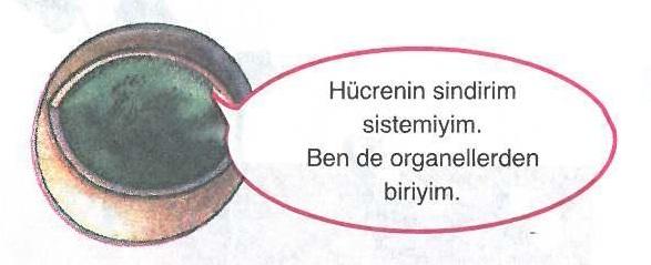 Hücrenin sindirim sistemiyle ilgili soru